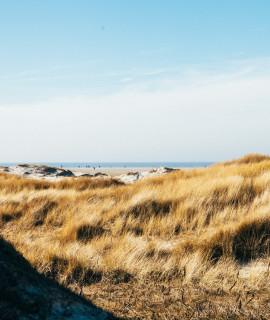 Wilde Strände für einen Winterspaziergang im Norden