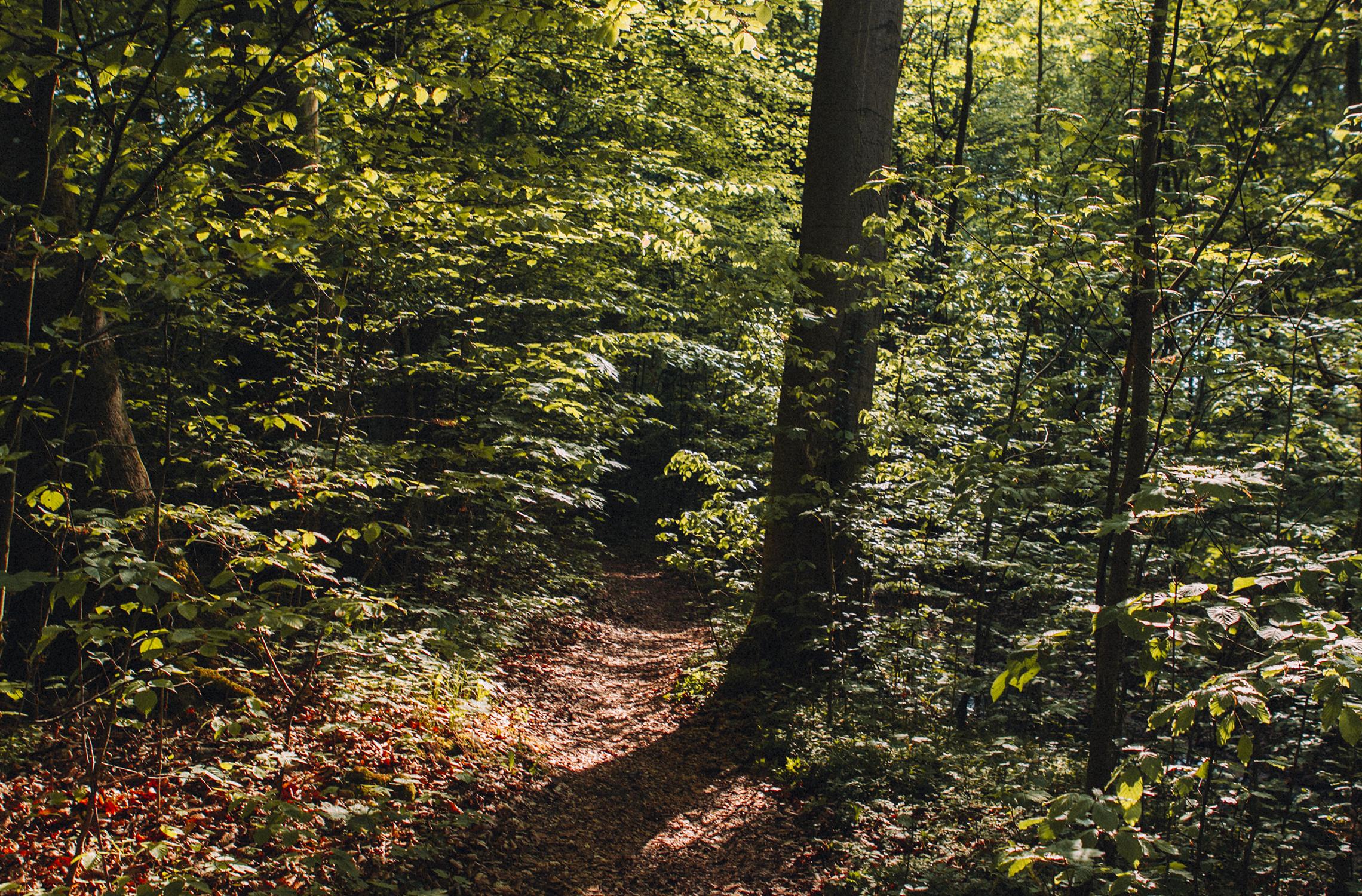 takemetothelakes Summtersee Mühlenbeckersee Spaziergang Herbstspaziergang 1