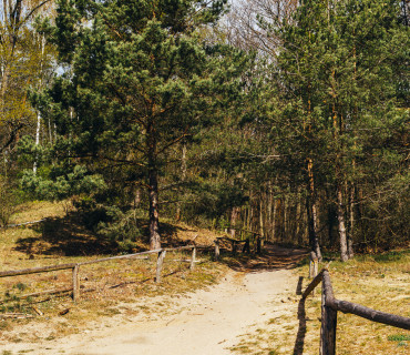 A Road Trip to Havel River – Forest Walks & Sandy Bays