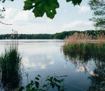 Ausflug zum Summter See – Wilde Ufer und sandige Lichtungen
