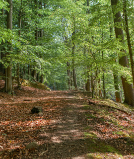 A Day Trip to Beech Forest Grumsin Near Berlin