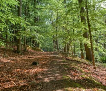Wald- und Seenwanderung im Weltnaturerbe Grumsiner Buchenwald