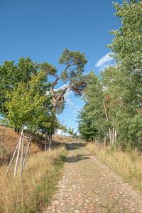 takemetothelakes Weshare Grumsiner Buchenwald 89