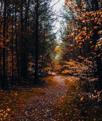 Ausflug und Herbstspaziergang in der Schönower Heide bei Berlin